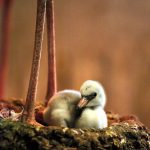 See flamingo chicks and other baby animals at the Dallas Zoo, which celebrates its 125th anniversary next weekend.