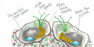A conceptual drawing for martini oysters from chef Adam Aschner